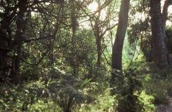 SN.12.jpg