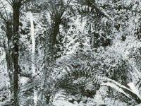 OT.27.jpg