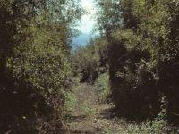RW.32.jpg